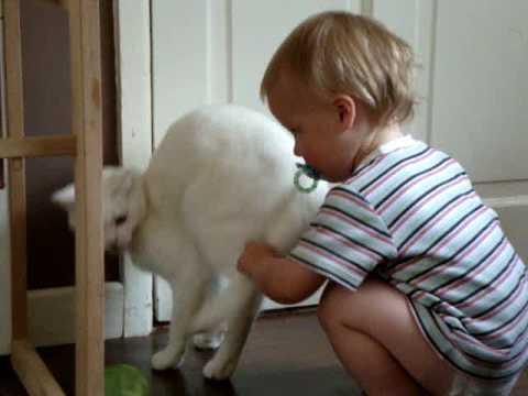 cat adoption pa