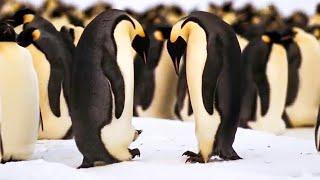 BBC Earth 50 Top Natural History Moments | 40-31