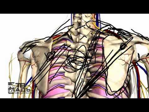 Анатомия Ozon671games #vk