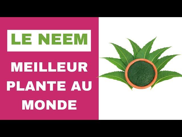 Le neem, meilleur plante au monde.