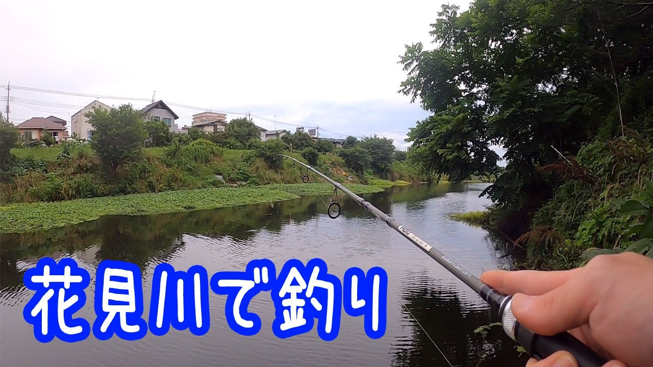花見川で釣り