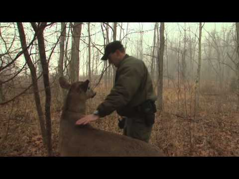 Indiana DNR's Robo-Deer Sting Operation | The Weekly Special