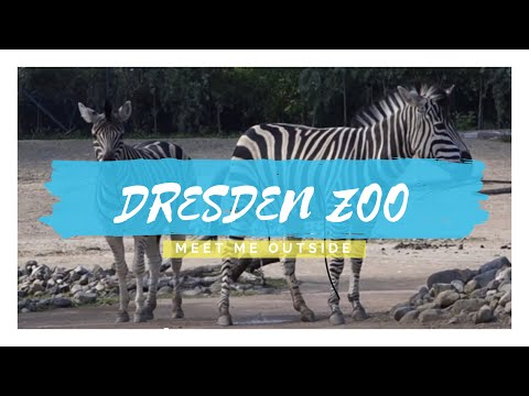 Dresden Zoo | Meet Me Outside