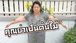 แกล้งซิลค์ คุณย่าเป็นต้นไม้ (เพราะกินเม็ดฝรั่ง !! ) - DING DONG DAD