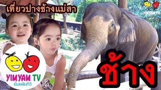 หนูยิ้มหนูแย้ม   ดูช้าง Elephants เที่ยวปางช้างแม่สา
