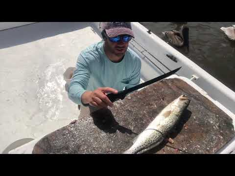 How to fillet a speckled trout with the Cuda Brand Titanium knife