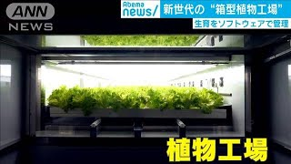 """新世代の農業""""箱型植物工場"""" ソフトで育成管理(19/12/12)"""