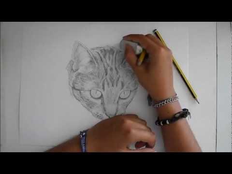 Speedpaint ritratto a matita di un gatto disegno for Disegni belli da disegnare