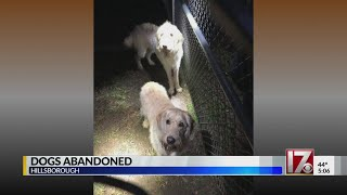 2 dogs abandoned at 'freezing cold' dog park in Hillsborough, police say