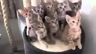 Смешное видео с кошками!!!(Спонсор видео: http://sanray73.ru/vodonagrevateli/?utm_source=social&utm_medium=youtube&utm_campaign=848474 - водонагреватели для дома и дачи., 2016-01-10T12:42:50.000Z)