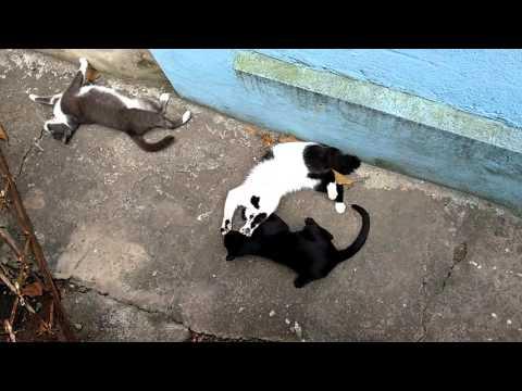 Rico vs Billy, cats fighting