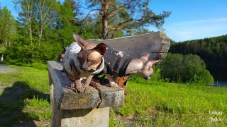 Sphynx cats in beautiful nature / DonSphynx /