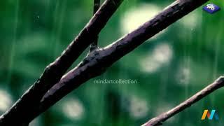Rain Sounds 10 Hours:The Sound of Rain Meditation, Deep Sleep,Relaxing Sounds