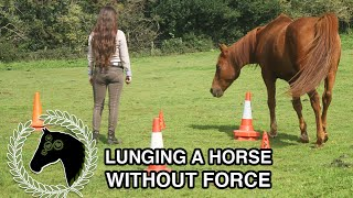 Lunging a horse without force