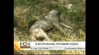 В Ветлужанке (Красноярск) отравили собак