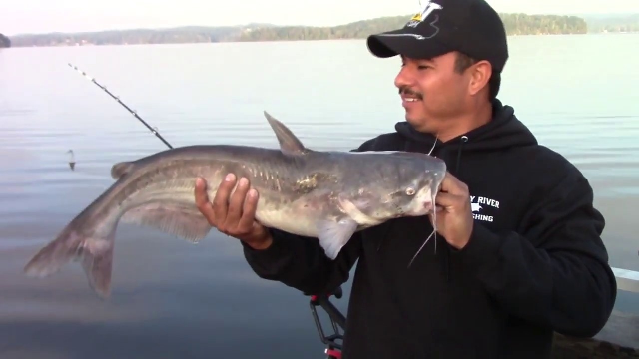 Fishing for catfish with the demon dragon at watts bar for Watts bar fishing report