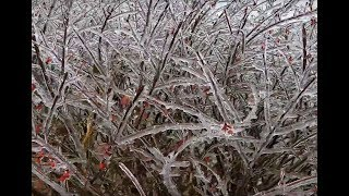 Ice Storm Southern Indiana 11/15/2018