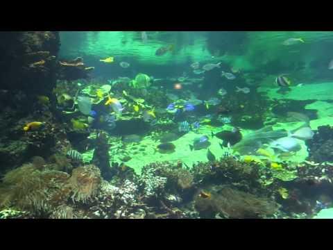 aquarium nausicaa boulogne sur mer
