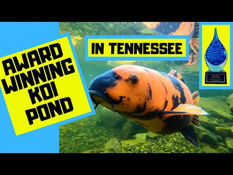 Award Winning Koi Pond In Maryville Tennessee