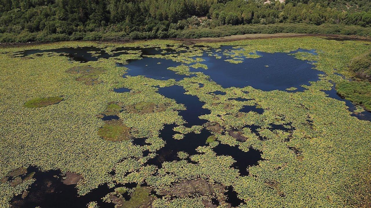 Το έλος Καλοδικίου, η λίμνη με τα νούφαρα (Θεσπρωτία) ΑΝΩΘΕΝ - Aerial video  by drone Dji Mavic Pro - YouTube