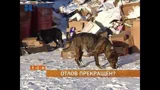 В Перми фактически прекращен отлов бродячих собак