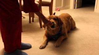 Molly the Ranger Dog
