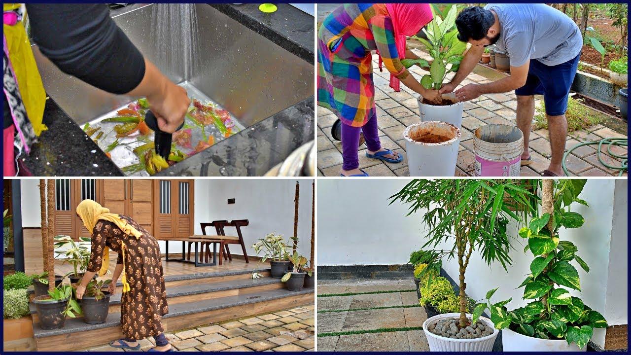 How i manage Kitchen food waste | Some Gardening & Rearrangement