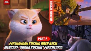 Part2| Kucing Oren Kecil Bar Bar Ingin Mencari \