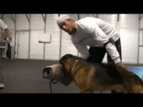 Dog vs Pig Mating Compilation by Funny Animals from YouTube · Duration:  1 minutes 56 seconds