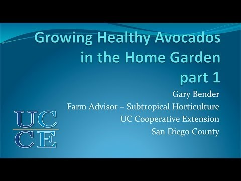 Session 8  Avocados With Gary Bender part1