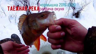Рыбалка на мормышку окунь клюёт как бешеный