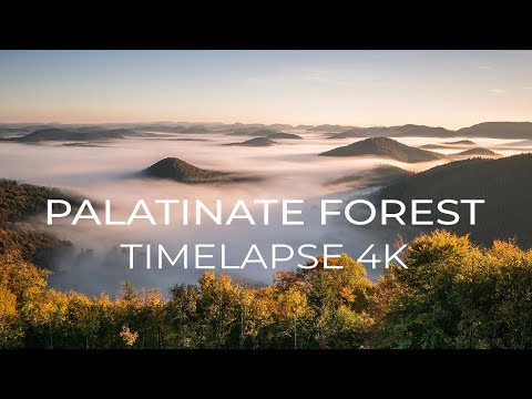 PALATINATE FOREST | Timelapse 4K
