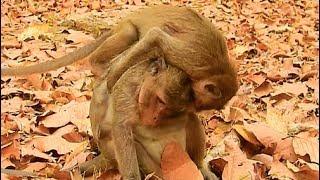 Jack Klay Drew- Step On Drew, very Satisfying Monkey Enjoy Playing.