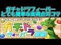【パズドラ】ガチャドラフィーバー!高得点のコツ解説!!新しいランキングダンジョン!?