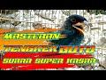 Tengkek Buto Gacor Super Kasar Cocok Buat Masteran  Mp3 - Mp4 Download