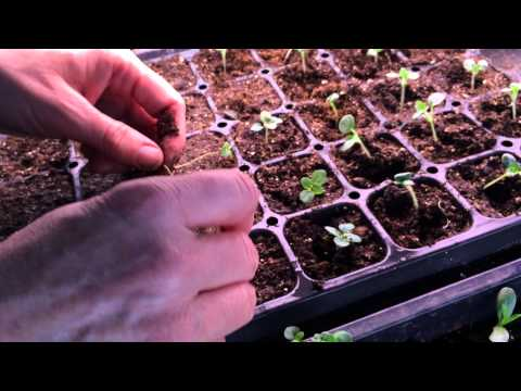 LBF Seed Starting 2015