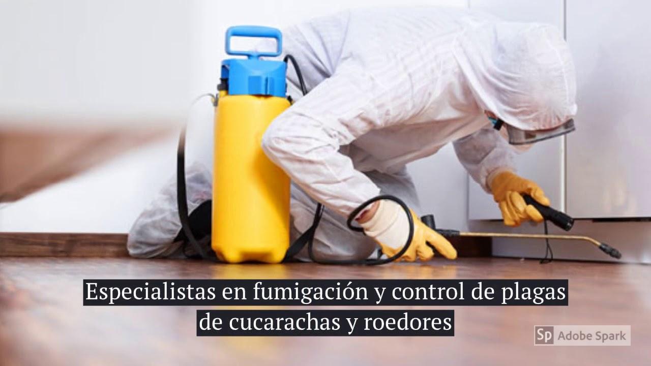 Fumigación y Control de Plagas.
