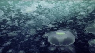 Open Ocean: 10 Hours of Relaxing Oceanscapes | BBC Earth thumbnail