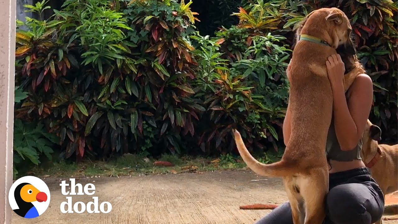 Skinny Mama Dog Is So Pretty And Happy Now | The Dodo Foster Diaries