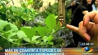 Mariposario en el Jardín Botánico de Bogotá