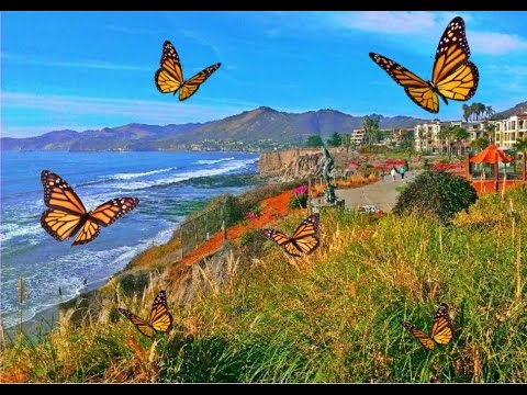 Pismo Beach The Monarch Erfly Grove 3 Day Getaway You