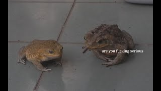 Frog Commentary 2