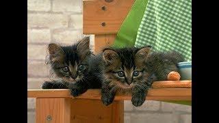 Удивительные кошки, котята, кошаки...