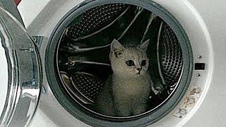 Стирка! Любимое развлечение кота!