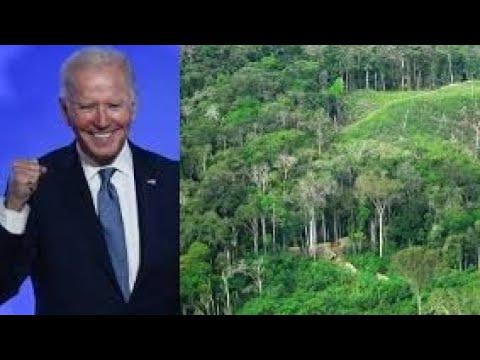 """""""Queremos uma CPI da Amazônia no Congresso dos EUA"""""""