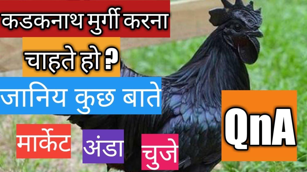 Kadaknath murgi palan #QnA #episode