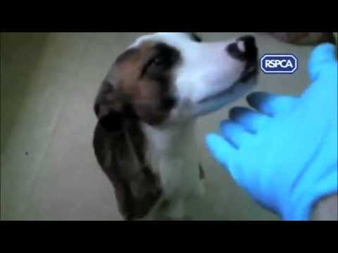 RSPCA publishes shocking videos of animal abuse