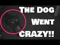 CRAZY DOG ATTACKS!!