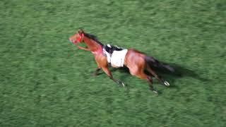 跑馬地馬場有馬匹在開跑前自由奔跑 (2018/03/28)