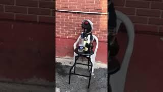 Funny vines videos